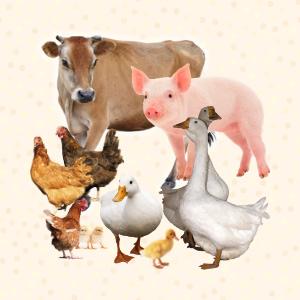 កសិដ្ឋានចិញ្ចឹមសត្វ Farm Animals